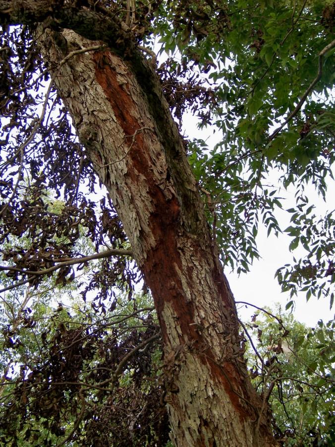 lightning tree