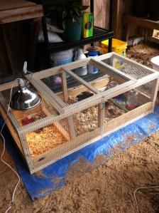 brooder cage